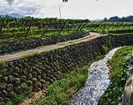 Eco Tours Japan Winery and Wine Tasting tours in Katsunuma Yamanashi